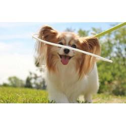 Keret látássérült kutyáknak