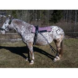 Mozgásfejlesztő lovaknak