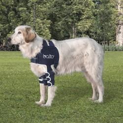 Balto - Vállmerevítő kutyáknak